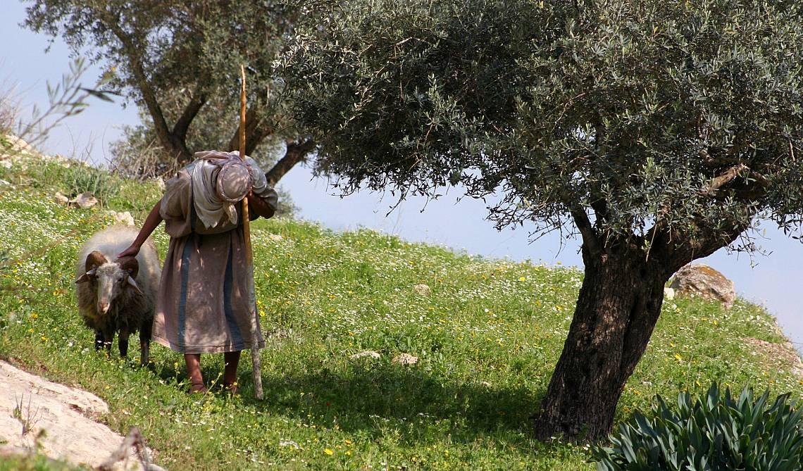 Земеделието и отглеждането на маслини били сред основните занимания на галилейските селяни. Снимка: iStock