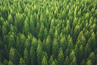 Апел от над 500 учени: не горете дърветата