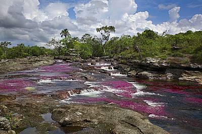 Каньо Кристалес - реката с петте цвята