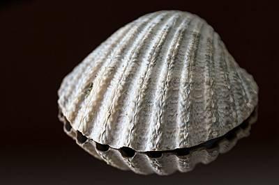В гигантска мида била открита перла с тегло над 6 килограма.