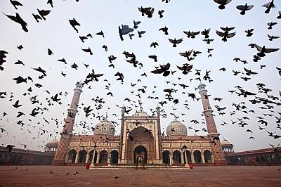 Джама МасджидЕкстериорът на индийската джамия Джама Масджид съчетава пясъчник и мрамор. Неин архитект е известният Устад Халил.