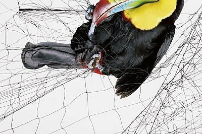 Птици в мрежата