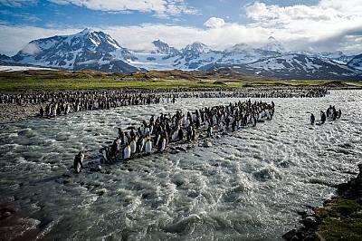 Южна ДжорджияНа този остров, намиращ се на два дни плаване източно от нос Хорн, има униклани колонии на кралски пингвини. Тук гнездят и милиони други...