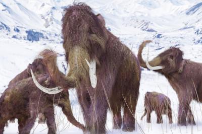 Учени планират да заселят Арктика с хибридни мамути