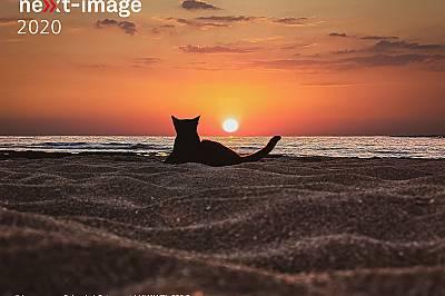 """""""Cat sunset""""  - категорият """"Timeline"""" Заслужава да се отбележи, че броят на кандидатурите във видео категорията """"Timeline"""" се е ув..."""