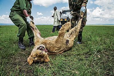 Отровената Африка
