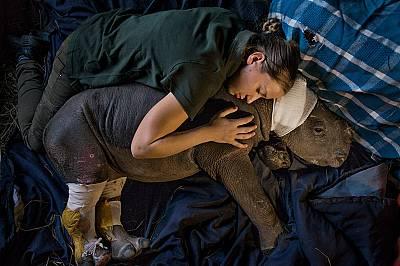 """Майката на Лула била убита от бракониери Майката на Лула била убита от бракониери в националния Националния парк """"Крюгер"""". Днес тя..."""