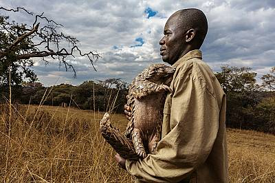 Люспениците: застрашени от изчезване