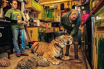 Тигрите край нас