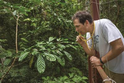 Насекоми в Амазония