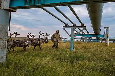 Ненецките пастири