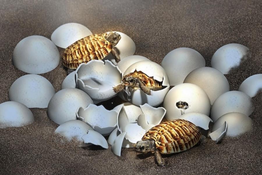 Вкаменелост, открита в Китай изненада учените: вътре има бебе на гигантска праисторическа костенурка.