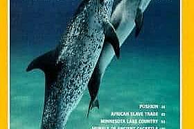 Септември 1992 - Делфини в кризаДвойка атлантически петнисти делфини се нос