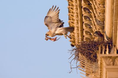 """Как COVID """"помага"""" на птиците да отвоюват градовете?"""