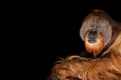 Какво губим, когато животните изчезват
