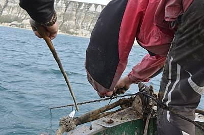 """Джеймс Търнър: """"България има уникален шанс да се превърне във водеща страна в опазването на китоподобните в Европа"""""""
