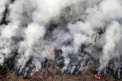 Как търсенето на месо подхранва пожарите в Амазония