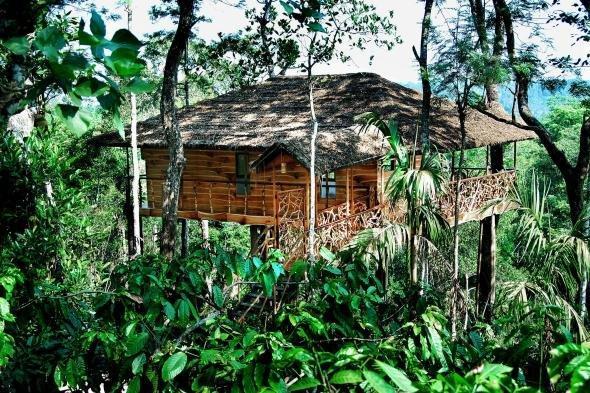 Хотели в дърветата