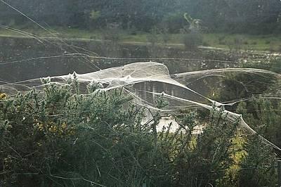 Милиони паяци покриха австралийски град с було от паяжина