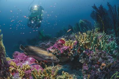 28 дни под морската повърхност