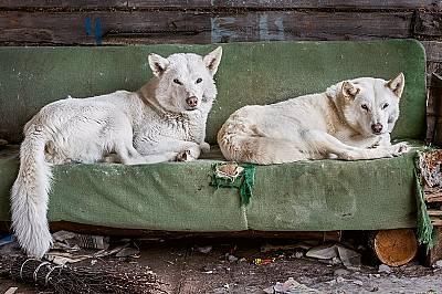 Кучетата в селото са се настани