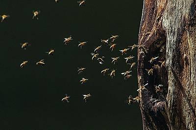 Тайните на пчелите