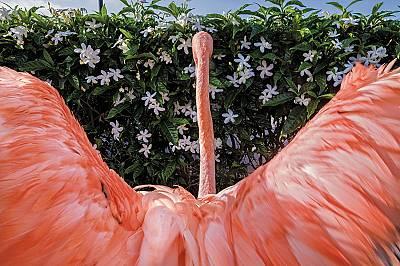 Фламингото Боб