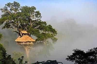 The Gibbon Experience Project, Хуайсай, Лаос The Gibbon Experience е известен като едно от уникалните места за настаняване в Лаос. Може да предприемет...