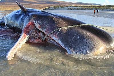Защо животните в океана ядат пластмаса?